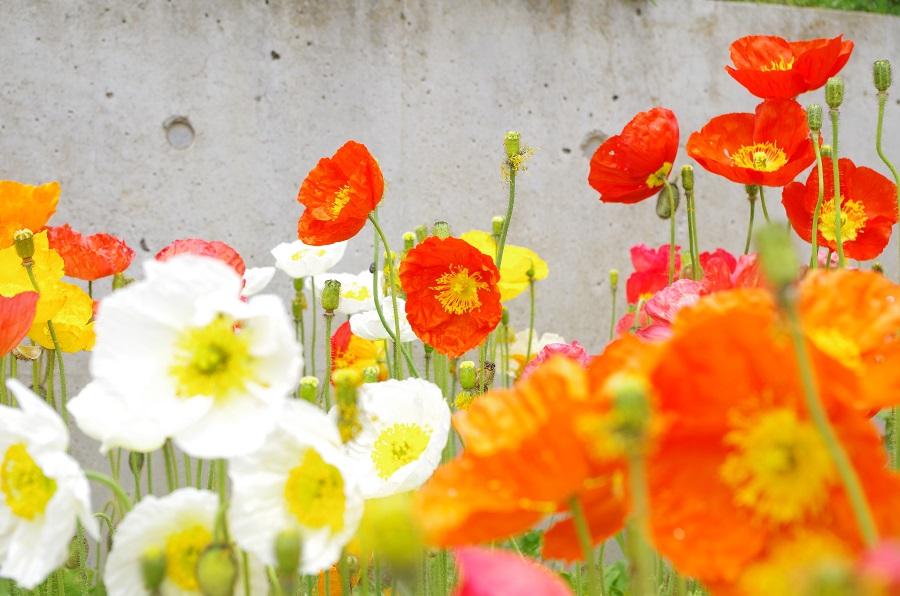 お花に癒されてきました(*´▽`*)