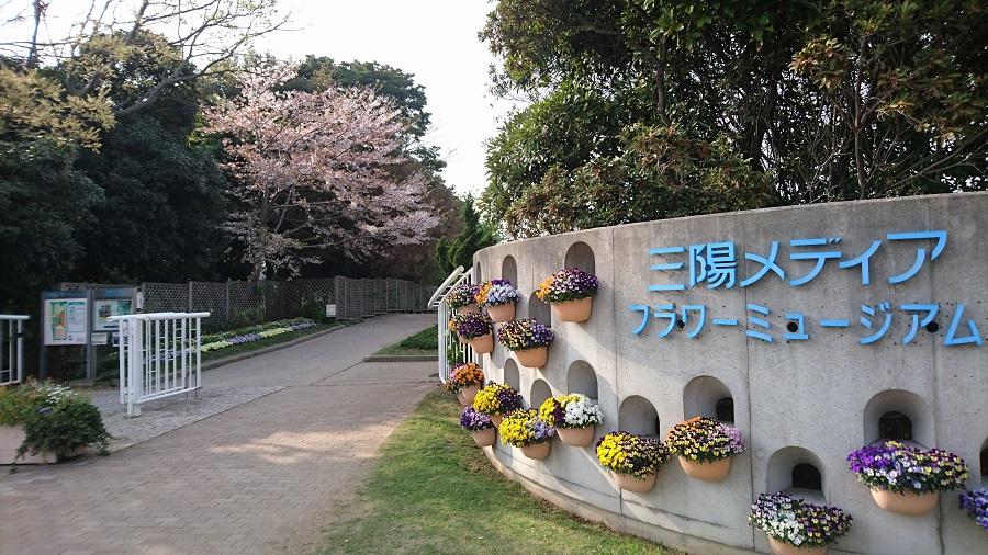 春なのでお花を見に行ってきました(*´▽`*)